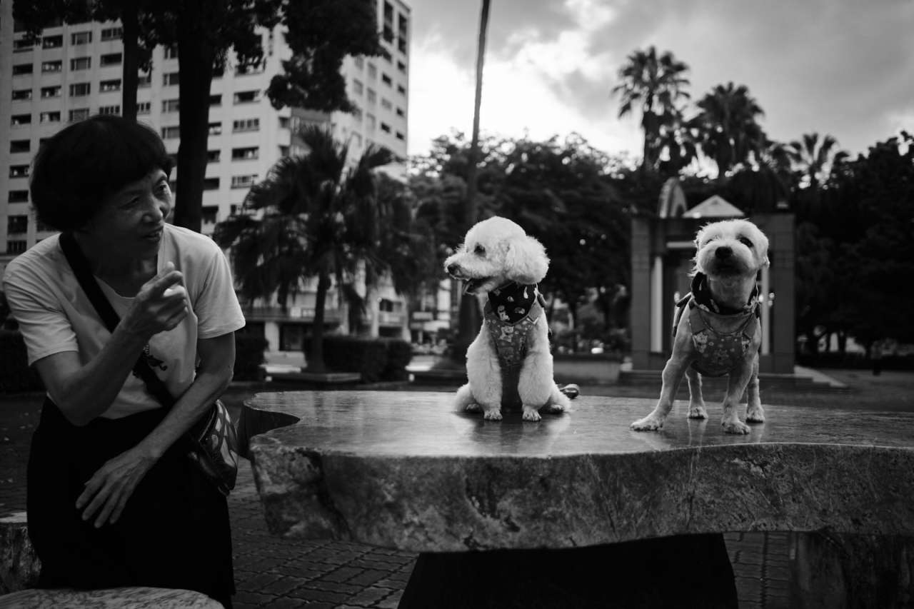 Street Portraits: Pet Edition in Tainan